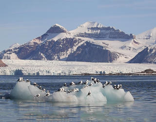 Birds in the arctic
