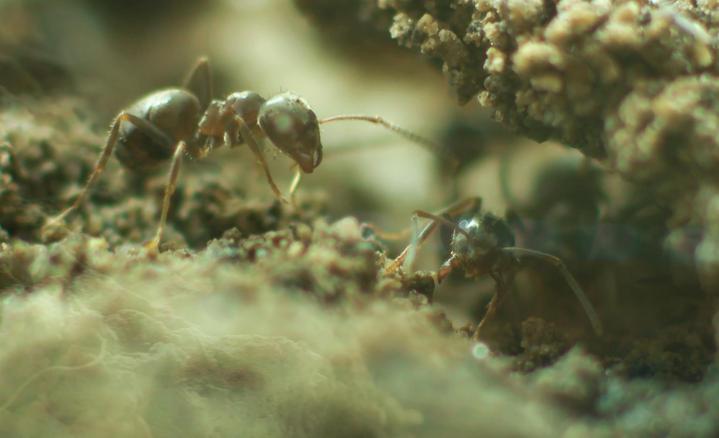 Macro shot of an ant