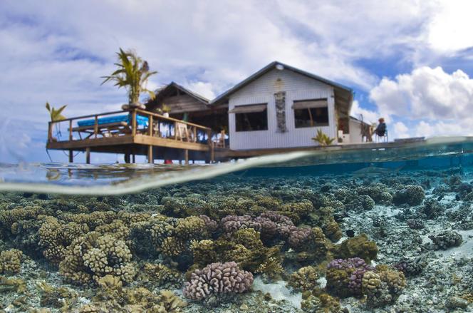 Corail, Polynésie française