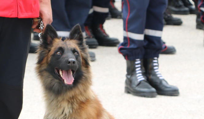COVID-19: Sniffer dogs to the rescue?