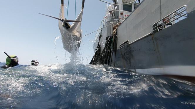 Tracking the bluefin tuna