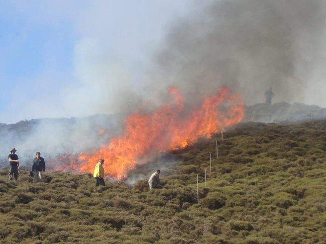 New tools to help predict forest fires