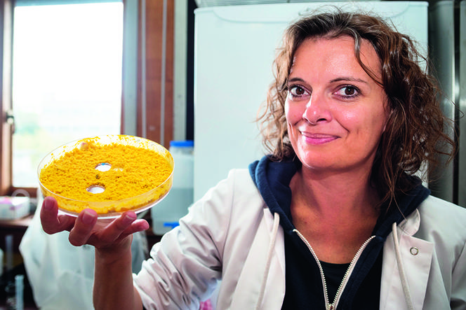 Slime moulds head for space