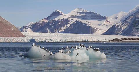 Birds in the arctic