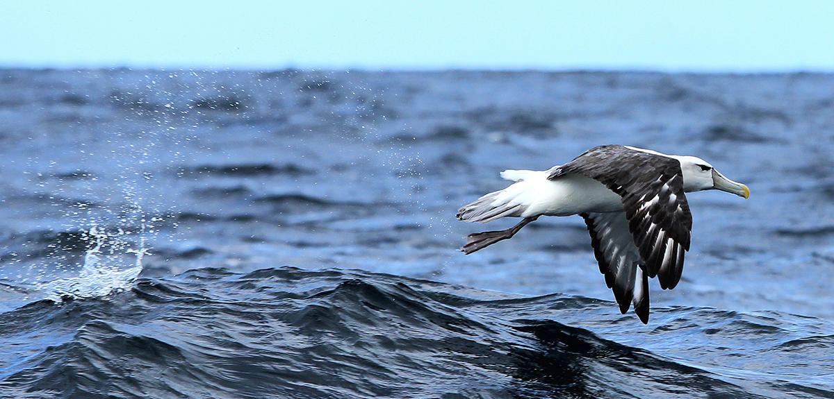 why did the mariner kill the albatross