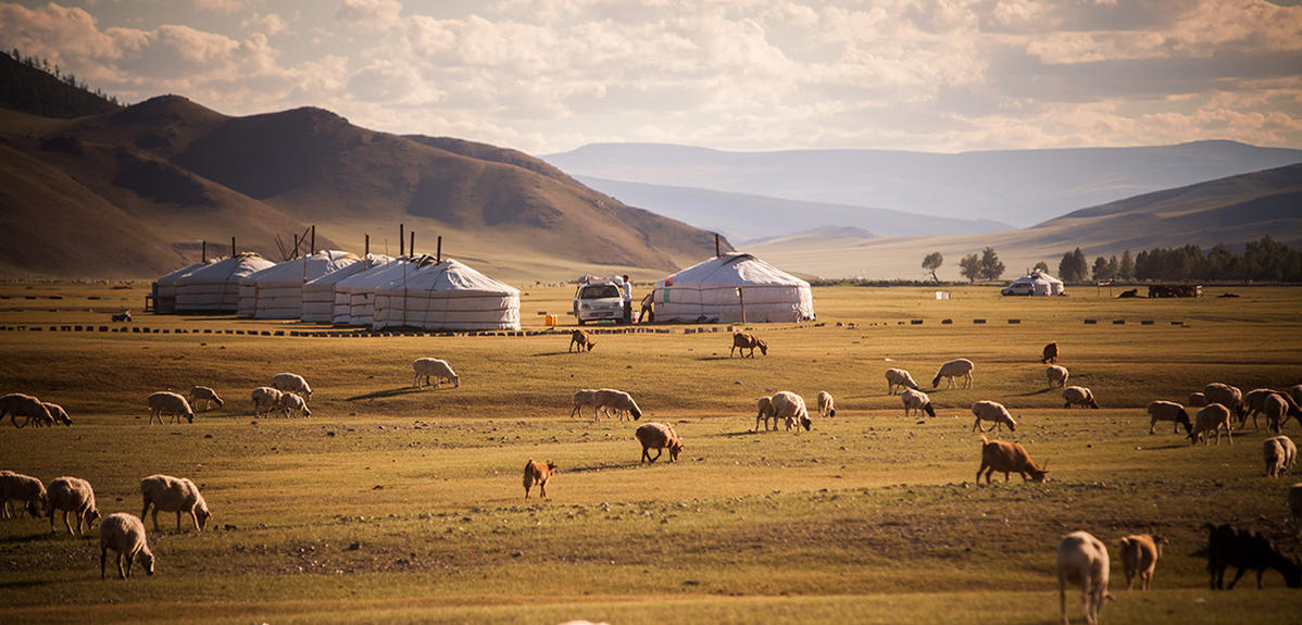 Unfolding 40 million years of Asian steppe history