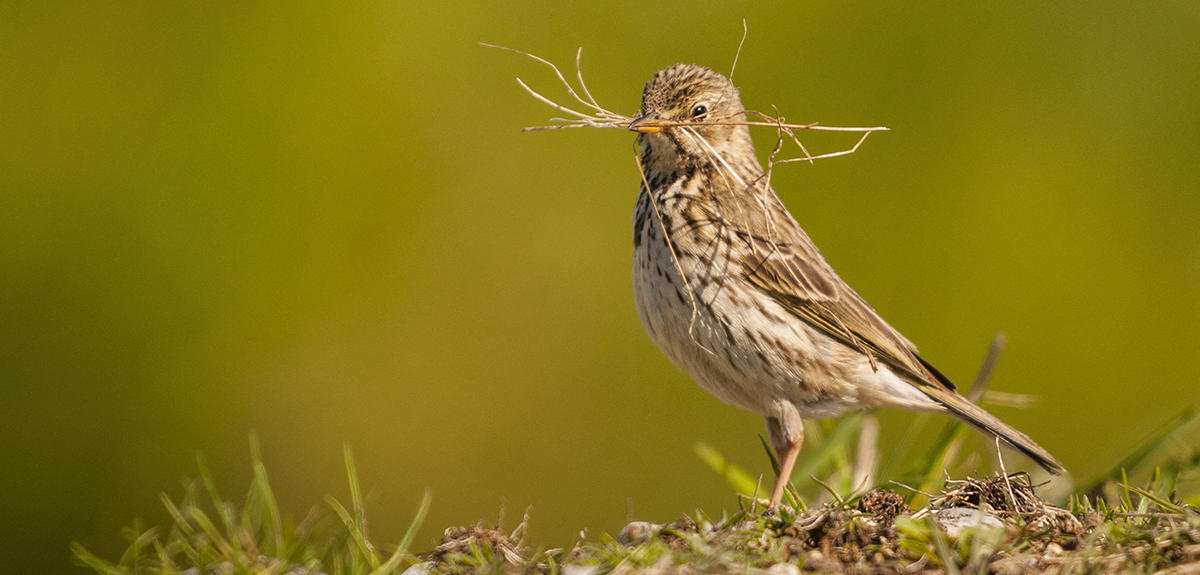 where have all the farmland birds gone cnrs news