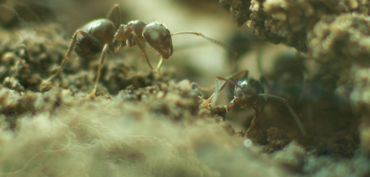 Macro shot of an ant