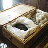 Papyrus carbonisé pris sur le site d'Herculanum